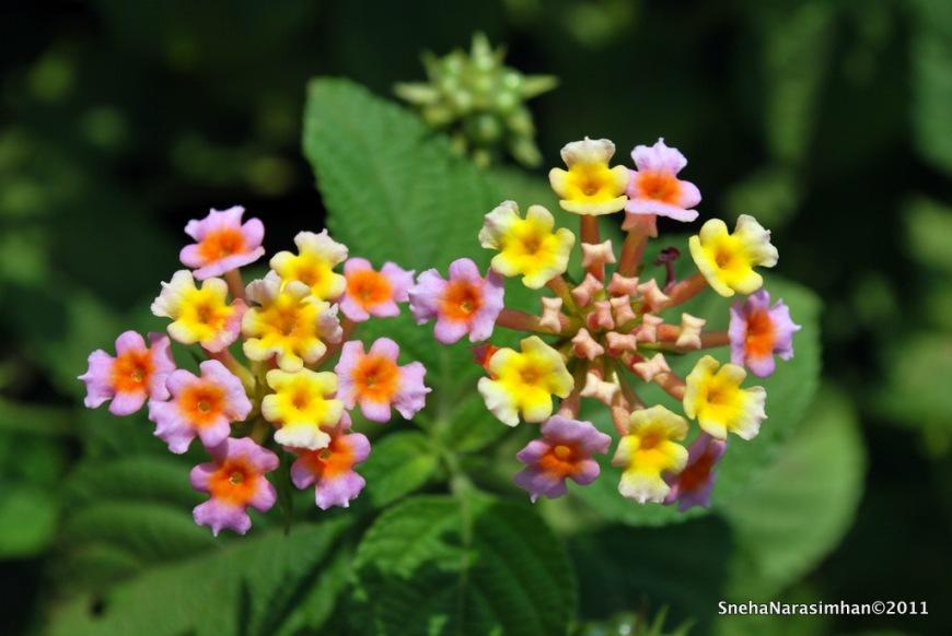 Spring Flowers Through My Lens